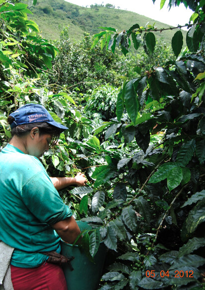 7644793530 a4e3a6e4fc z Ecuador Coffee Farm for Sale