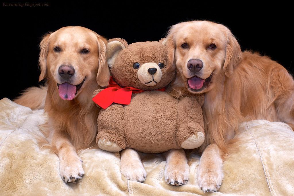 The Boys and Bear