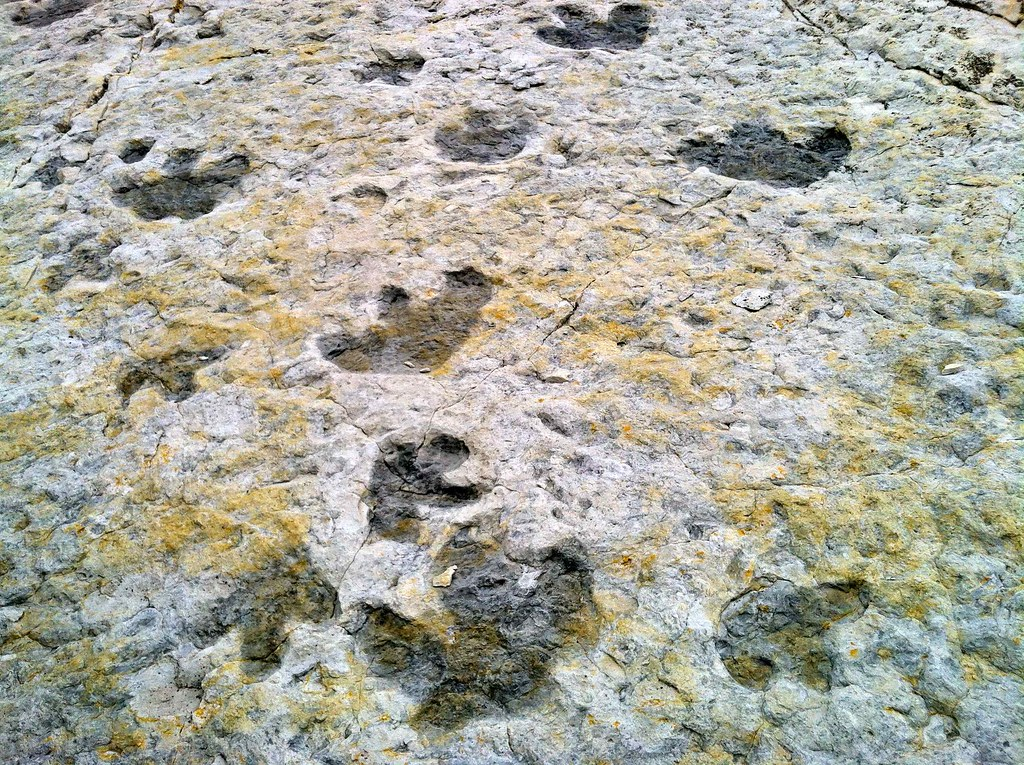 iguanadon footprints!!