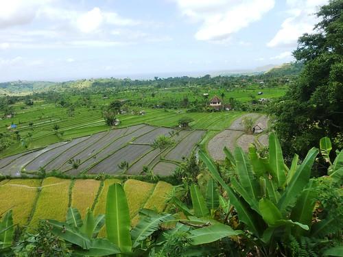 Bali-Amed (39)