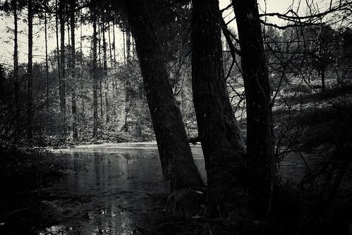 white black forest river bayern bavaria woods fluss wald weiss scharz mangfall manfalltal