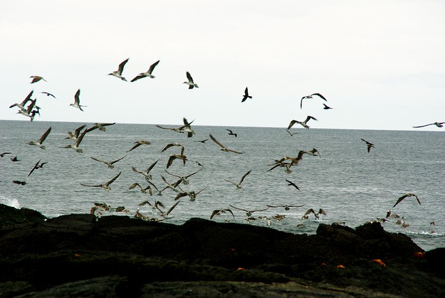 birds in the galapagos