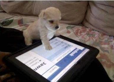 puppy fb