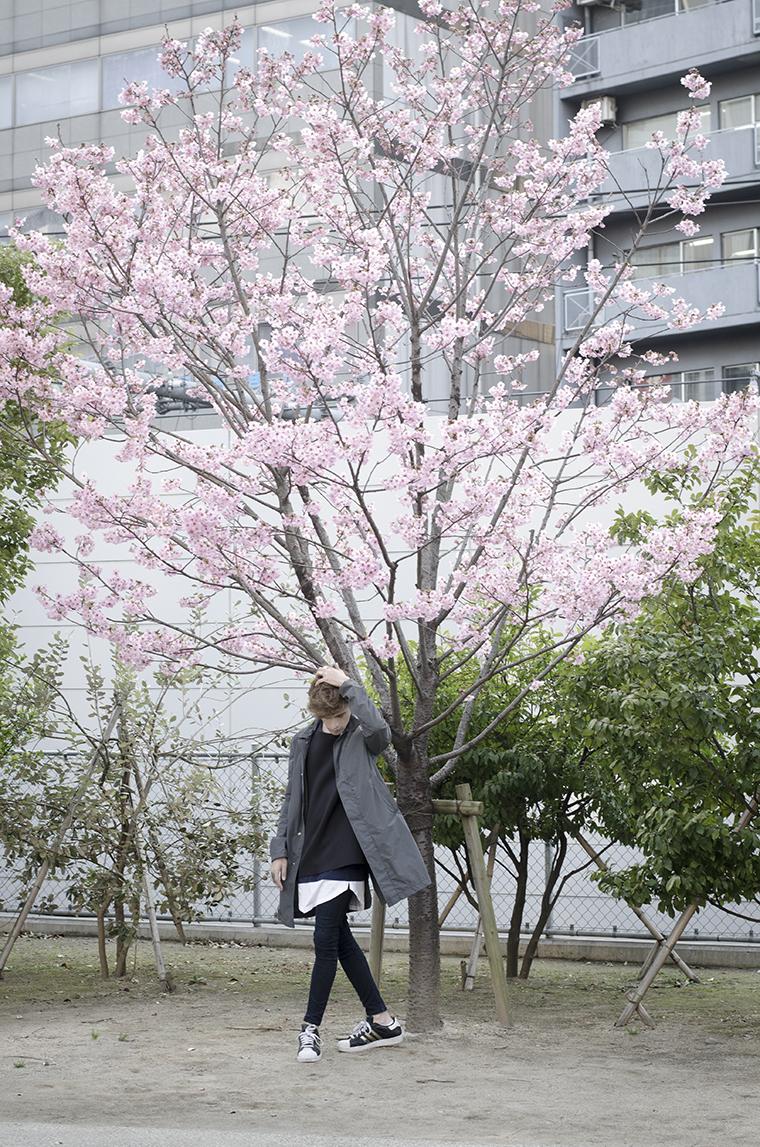 Japanese Cherry 3