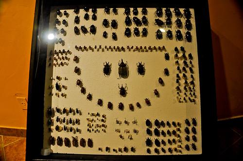 Museo de Paleontología (21)