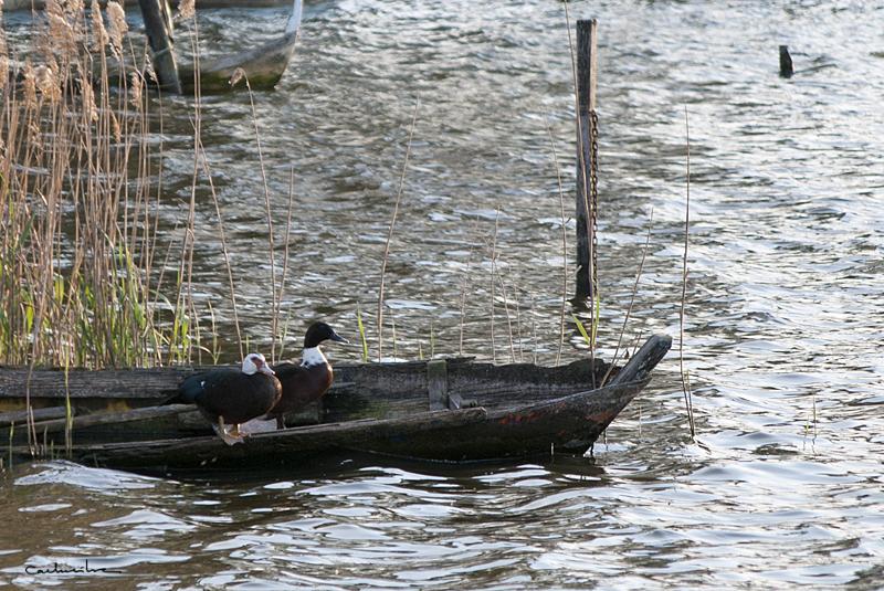 Lagoa de Mira'12 0042