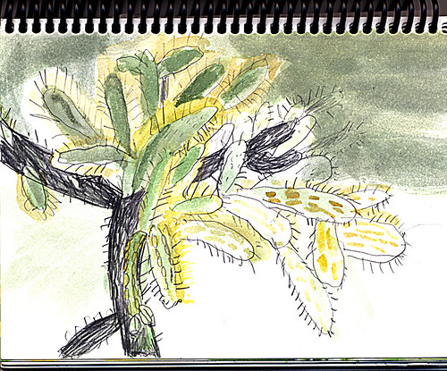 sketch of cholla cactus catching the morning light