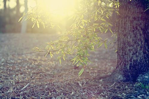 light sunset sun tree green nature leaves canon leaf spring