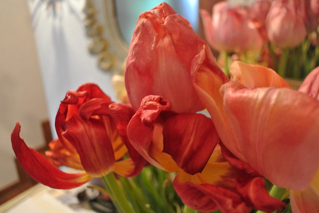 Morbid Tulips