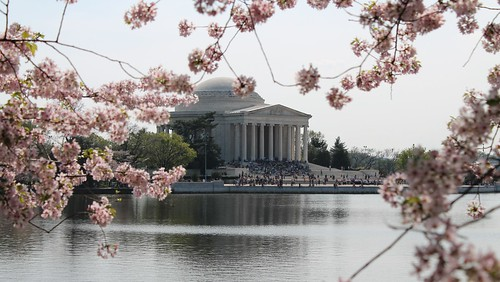 44a.CherryBlossoms.TidalBasin.SW.WDC.23March2012