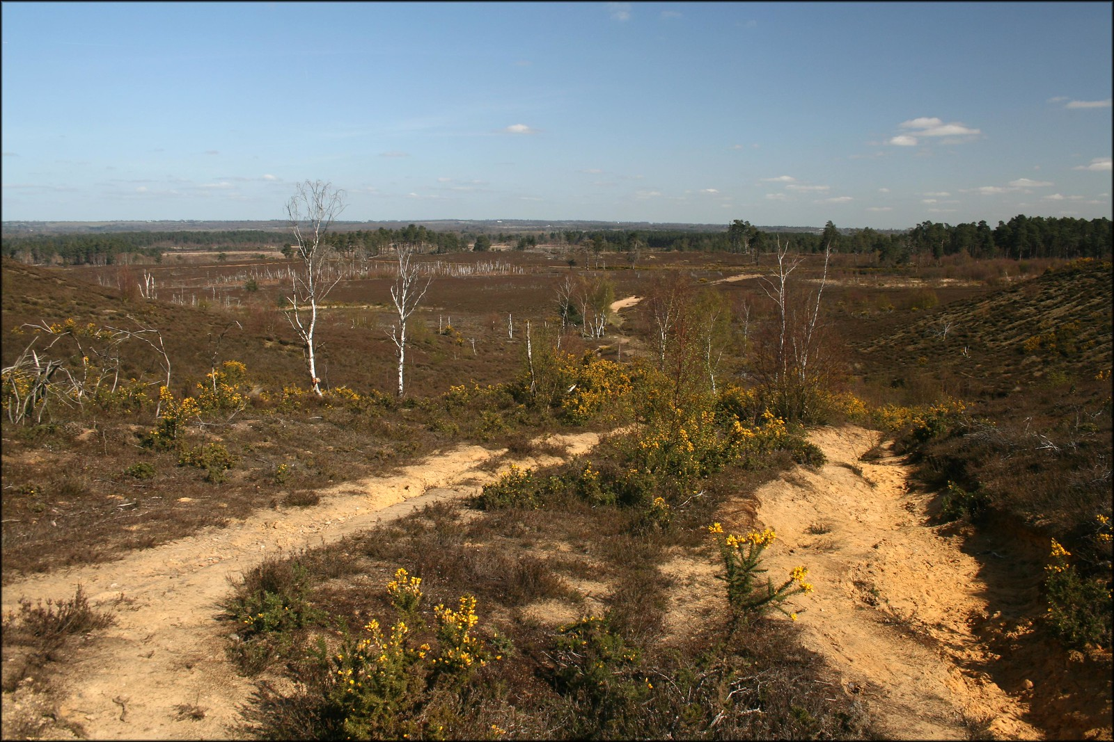 Thursley Common