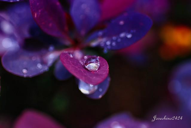 Un dia de lluvia mas