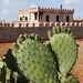 cactus palace