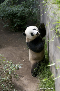 Yun Zi checks out his exhibit..