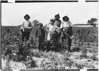 Slebzak family (Polish) working on Bottomley Farm. They have worked here 3 years and one winter, June 1909