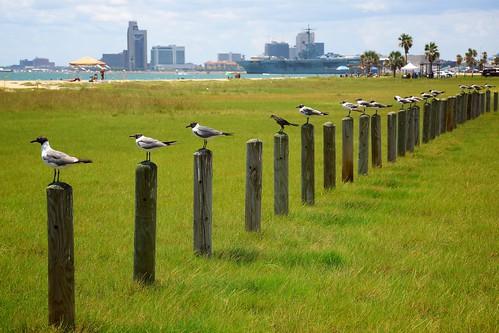 Bird Lineup