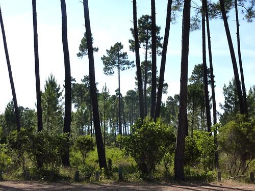 Parking de la forêt de Pinia