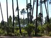 Dernier parking de la forêt de Pinia