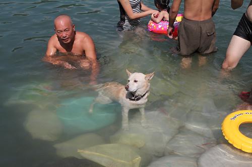 小狗也下水了