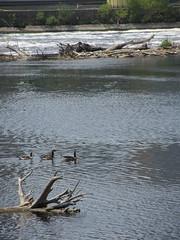 Hennepin Island Park