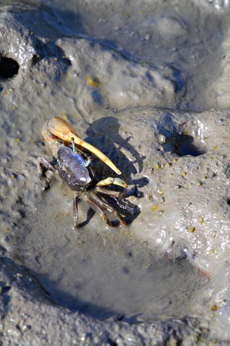 072312_05_crab