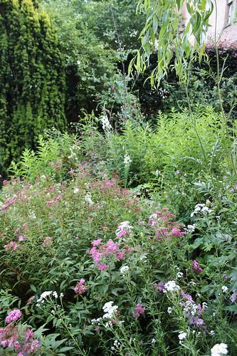 Le jardin de Laurent - Page 2 7752055714_5f3ef16a73
