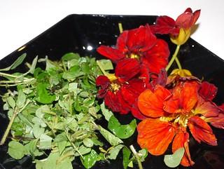 Blomkarse og urter