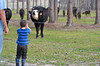 Jacob was a bit startled at how loud that cow bellowed!