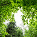 Springtime Megafoliage