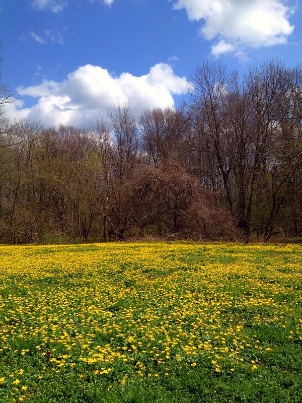 frisbee field - cherokee park