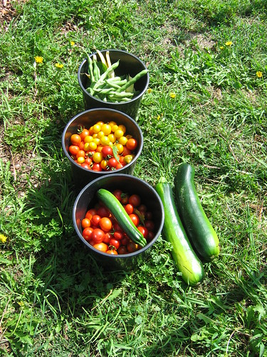 Harvest from Jan 2012