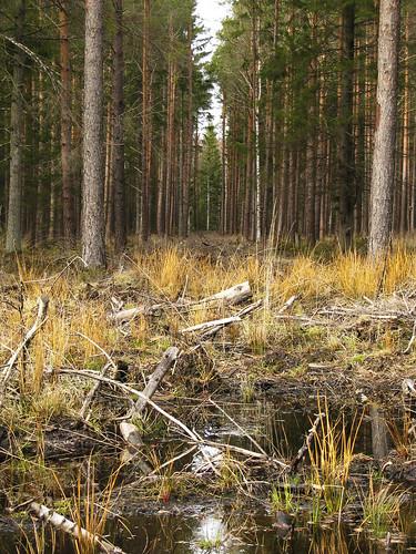wood forrest swamp