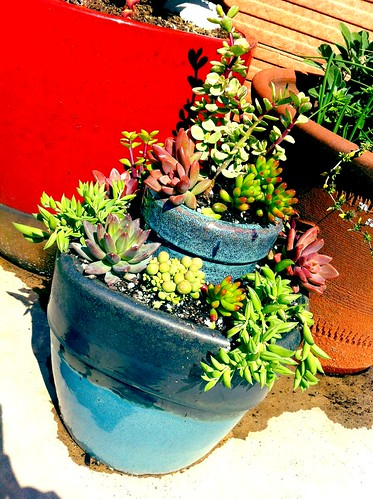 DIY: Tiered Succulent Garden by Sanctuary-Studio