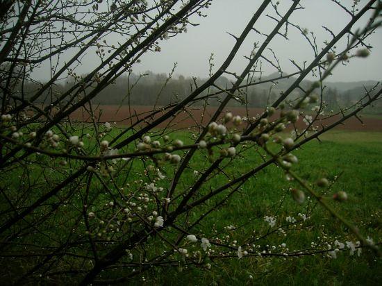 flores lluvia