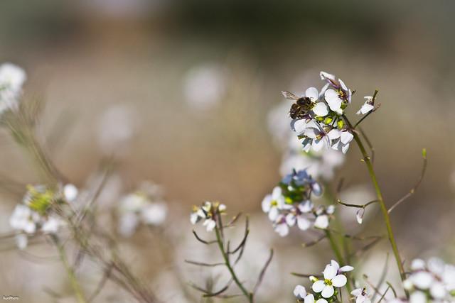 Reto primavera