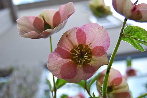 pink.2012.1