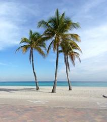 Florida-Beach Palmen