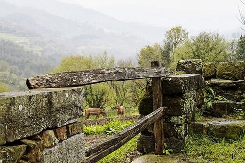 Fence & Horses --- HFF !! by margalice / marga