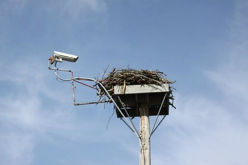 New osprey cam on it's mount high above Smith Mountain Lake