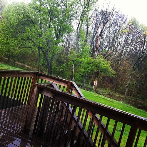 Opening the window to listen to the pitter-pat of the raindrops. And loving the green.