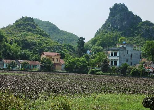 V-Lang Son-Lac Ho Phai Loan (3)