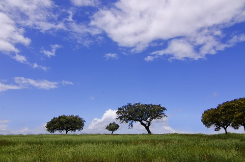 trees nature colors nikon angle wide vivid tokina alentejo steppes 116 1116mm d7000
