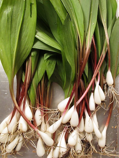 ramps, no dirt