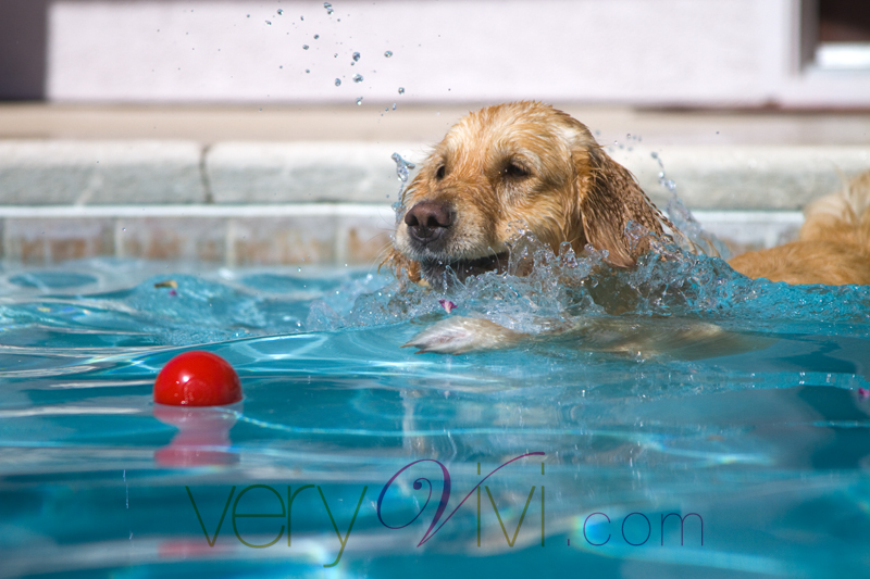 2012-06-15-pool_MG_6724-800w