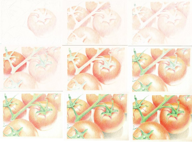 2012_06 tomato_drawing process