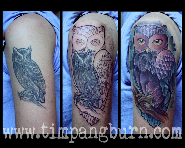 owl on owl flickr photo sharing