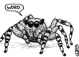 ds13.1---spiderword