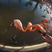 Alimentando flamingos by nathaliejourdan
