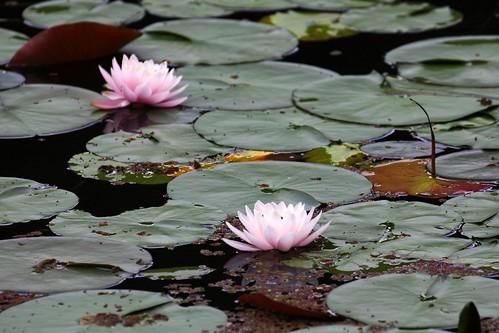 福山植物園0008