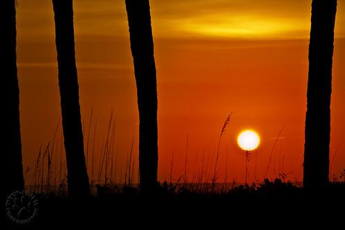 sunset sun beach silhouette palms florida palmtrees naples yeehaw whatisupwiththat deepfriedphotography